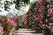 バラ公園 2