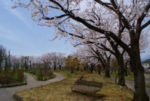 園内の桜並木