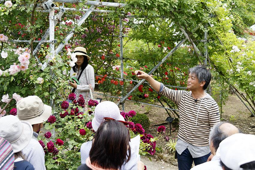 【小山内先生と園内を巡ってバラ探索】