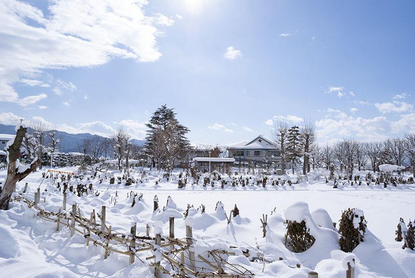 真綿の雪の一本木公園