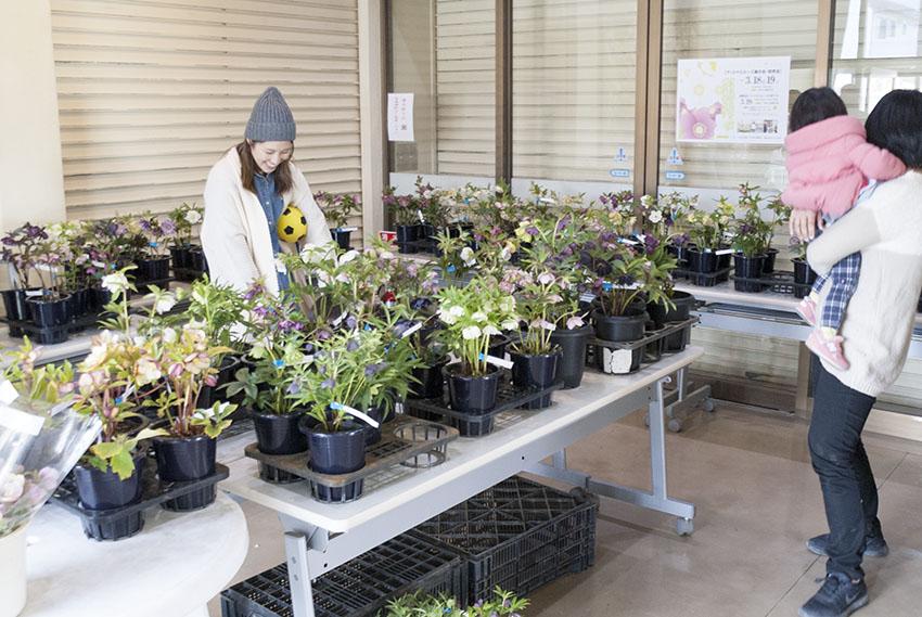 約120鉢を展示販売